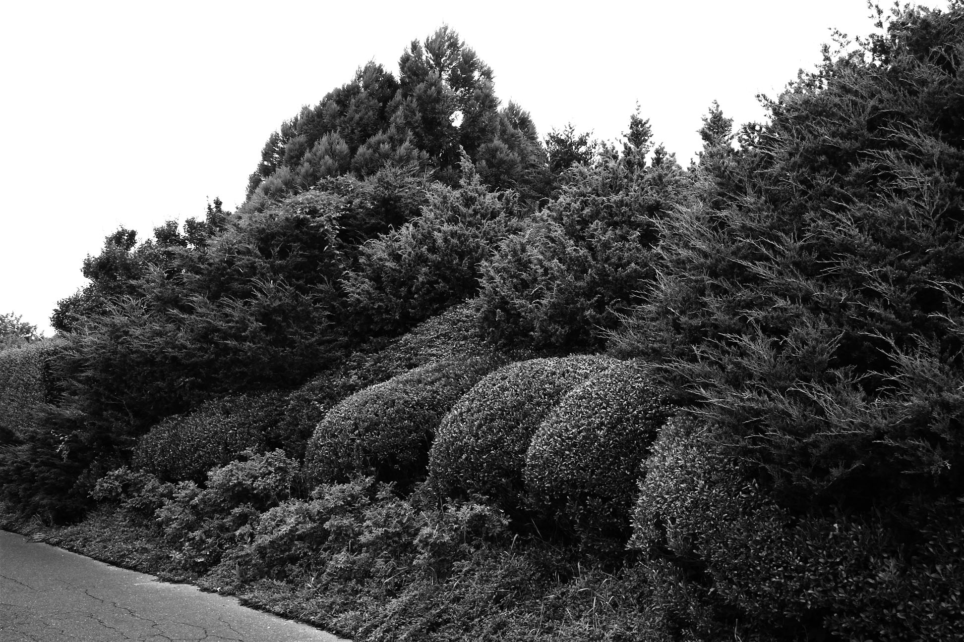 landscaping2bw