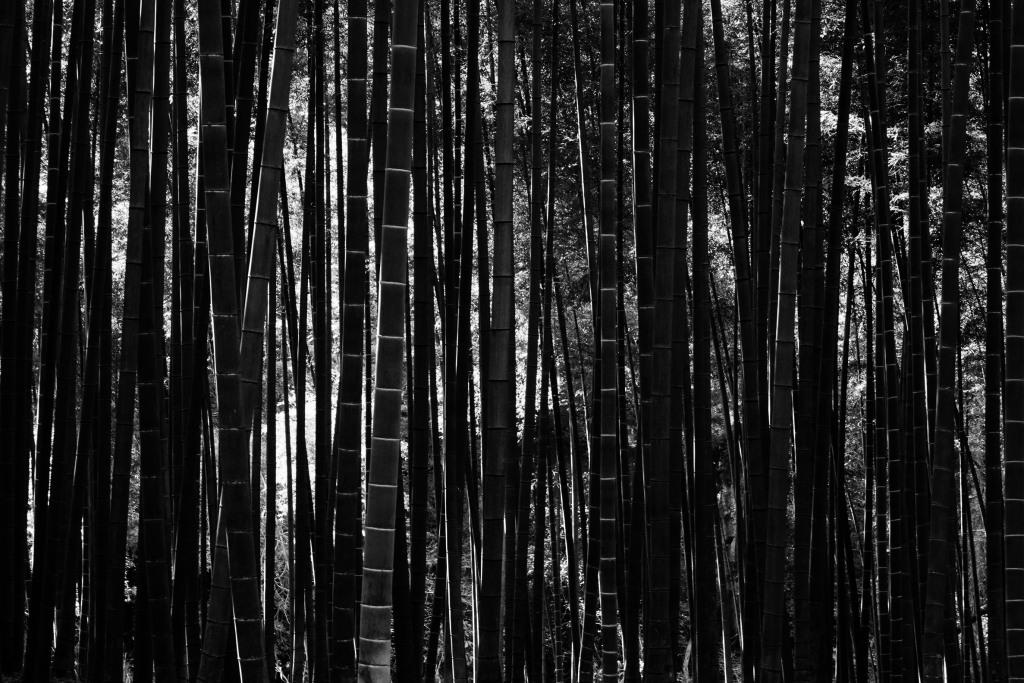 BambooBW