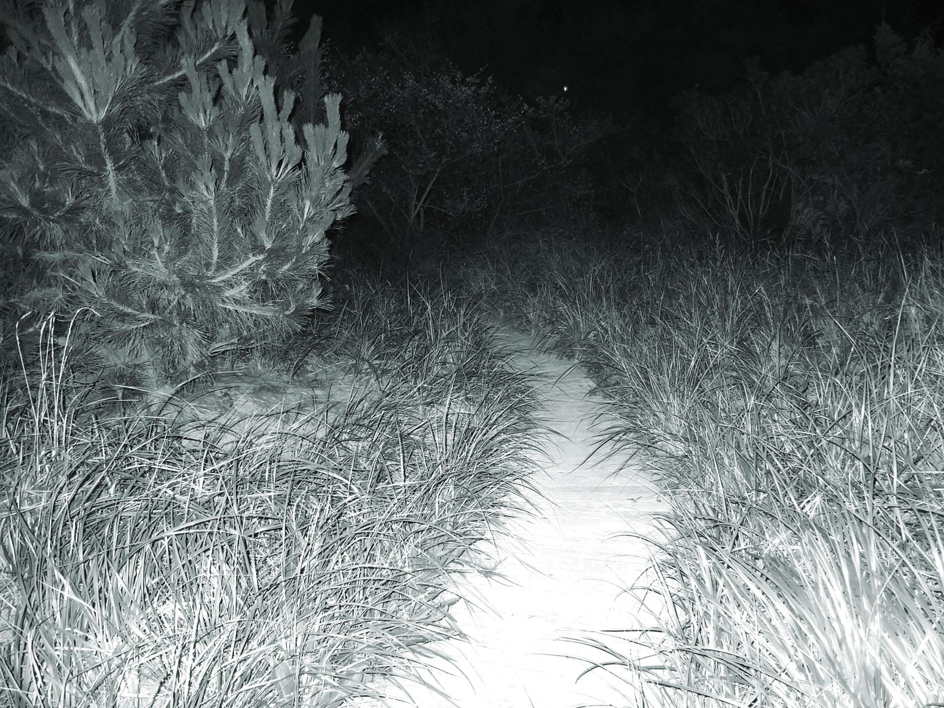 Landscape_Night